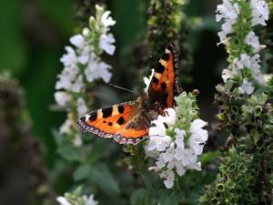 butterfly-199115_960_720