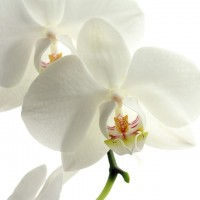 flower-179004_960_720